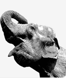 http://www.postgresql.org/media/img/feature/feature_elephant.png